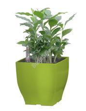 G21 Cube mini önöntöző kaspó zöld 13,5cm 6392575