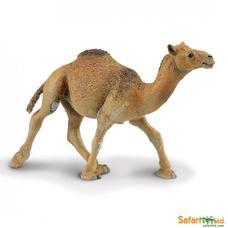 SAFARI Teve - Dromedary Camel